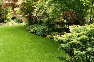 Mow Grass and Maintain Landscaping