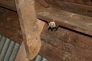 Control or Relocate Birds or Bats in Spring