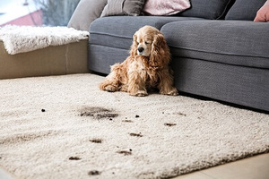 2020 Area Rug Cleaning Cost Homeadvisor