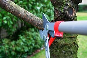 2020 Tree Trimming Cost Estimates Average Price To Trim Trees