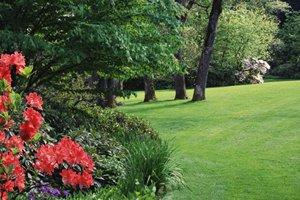Landscape Yard or Gardens in Byron