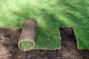 Install Sod in Fort Lauderdale
