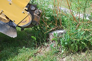 Remove a Tree Stump in Noblesville