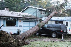 Find a Storm or Wind Recovery Service in Hendersonville