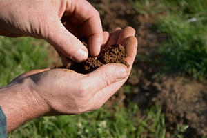 Analyze a Soil Issue (Soil Testing) in Marietta