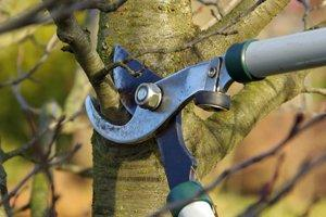 Trim or Remove Trees & Shrubs