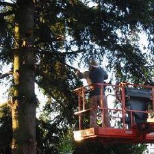 Photos Rawls Tree Service