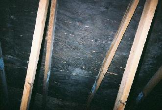 Mold in the attic pictures and photos 1 solutioingenieria Images