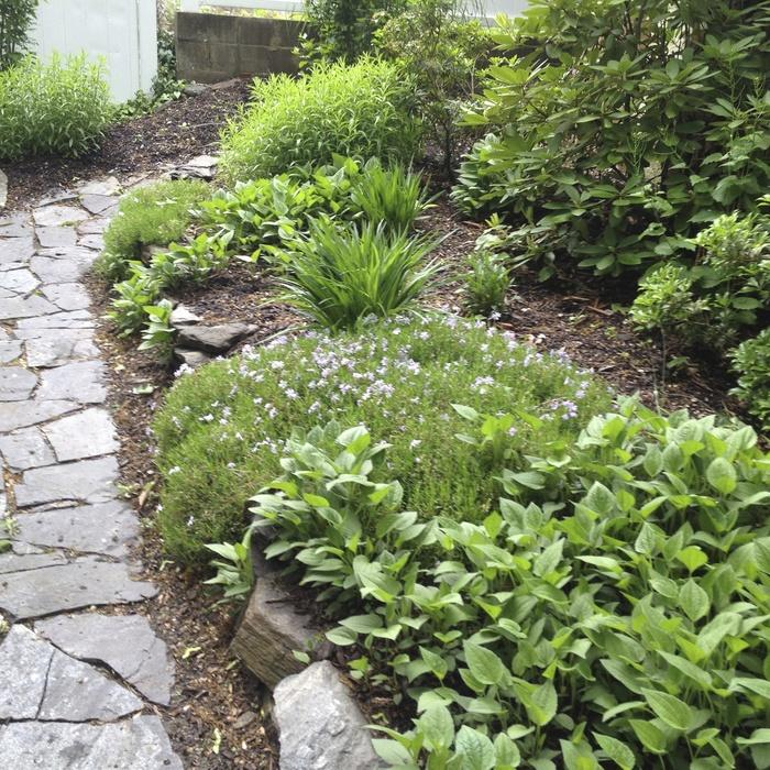 Various Front Yard Ideas For Beginners Who Want To: 7 Affordable Landscaping Ideas For Under $1,000