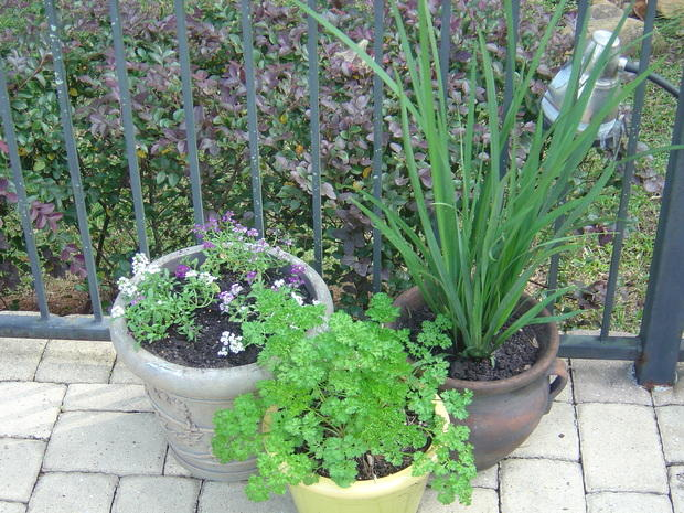 Traditional patio in tallahassee potted plants shrubs for Landscaping rocks tallahassee fl