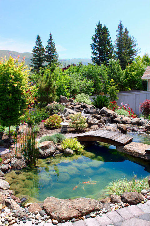 Transitional Landscape with small water fall in back yard
