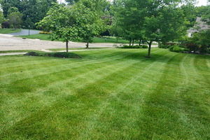 Local Lawn Mowing Services and Yard Maintenance Companies