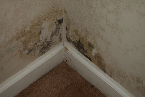 Local Black Mold Testing Services