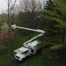 Ratings Reviews Accurate Tree Service