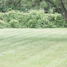 Reinert Lawn Care - Philadelphia, PA 19111 - HomeAdvisor