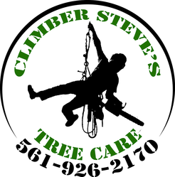 Climber Steve S Tree Care Llc Gainesville Fl 32601