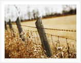 Barbed Wire Fence2